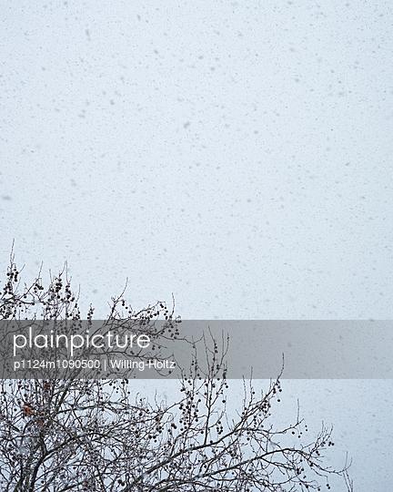 Baum im Winter - p1124m1090500 von Willing-Holtz