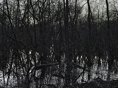 Forest lake - p1012m2228899 by Frank Krems