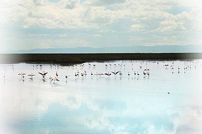Flamingos im Lago Uru Uru - p1038m1575342 von BlueHouseProject