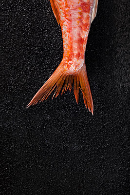 Overhead view of fish tail on black textured surface - p1166m1474287 by Cavan Images