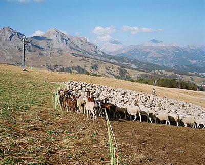 Enclosed herd #1 - p1349m1222809 by Nicolas Blandin