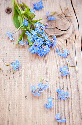 Forget-me-not - p533m1045369 by Böhm Monika