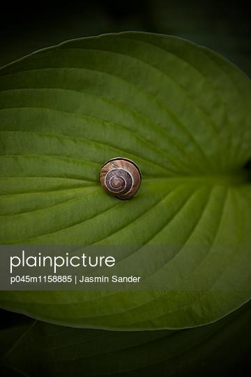 Schnecke auf Blatt - p045m1158885 von Jasmin Sander