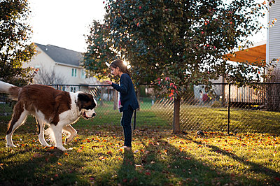 Side view of girl playing with Saint Bernard while standing on field in backyard - p1166m1414659 by Cavan Images