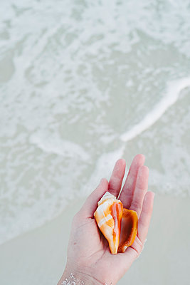 Conch Shell at the Beach - p1262m1584281 by Maryanne Gobble