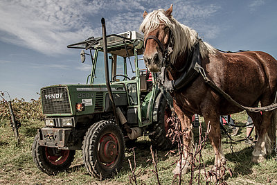 Ramses & The Tractor - p1402m1461988 by Jerome Paressant
