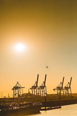 Blick auf Hafen- und Containerkräne im Vorhafen, Steinwerder, Hamburg - p1493m1585080 von Alexander Mertsch
