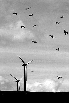 Wind turbines and birds - p1072m954944f by Ted Edwards