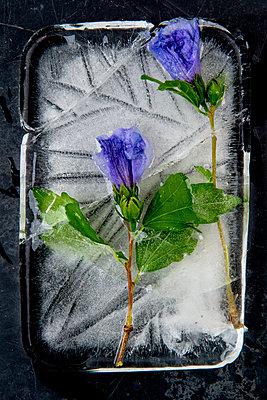 p451m2208819 by Anja Weber-Decker