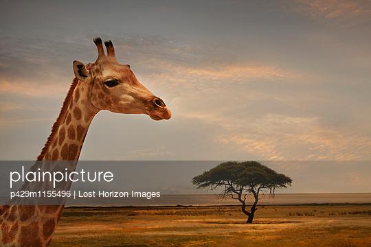 p429m1155496 von Lost Horizon Images
