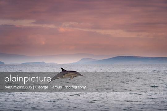 p429m2019805 von George Karbus Photography