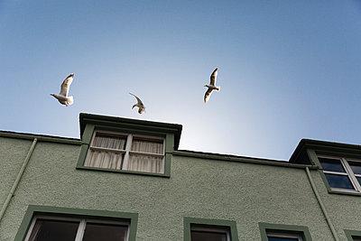 Seagulls over residential building - p1477m2038963 by rainandsalt