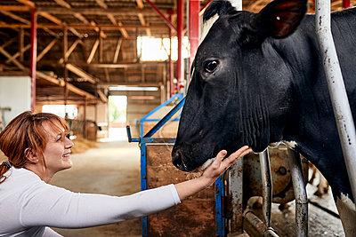 Smiling female farmer stroking black cow in dairy farm - p300m2199083 by Zeljko Dangubic