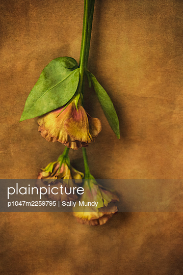 Upside-down spring flowers on brown paper tan background - p1047m2259795 by Sally Mundy
