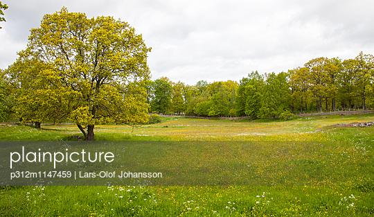 p312m1147459 von Lars-Olof Johansson