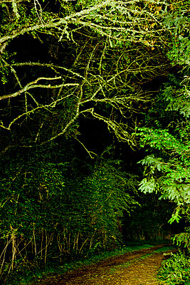 Forest path at night - p248m853934 by BY