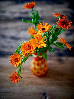 Orange Calendulas - p312m1192712 by Pernilla Hed