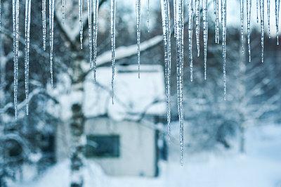 Winter scenery - p971m1115824 by Reilika Landen