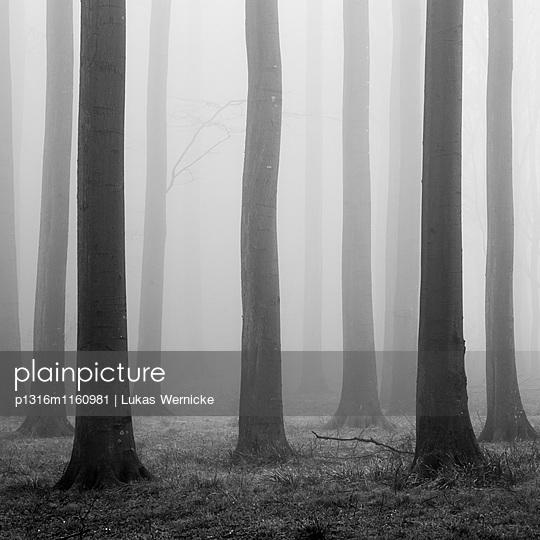 Kaltenhofer Moor , Dänischer Wohld, Rendsburg-Eckernförde, Schleswig-Holstein, Deutschland - p1316m1160981 von Lukas Wernicke