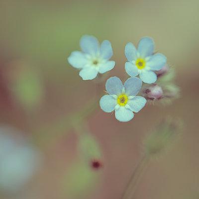 Blütenauge - p1578m2164596 von Marcus Hammerschmitt