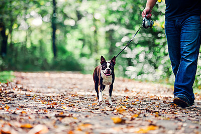 Man walking dog in rural setting, low section - p924m1580668 by Rebecca Nelson