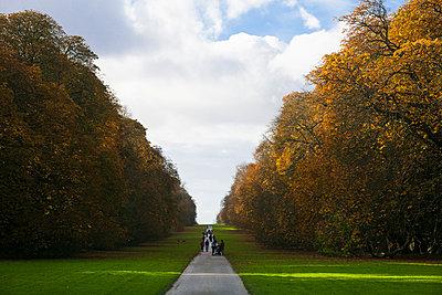 Park, Cotswolds - p1057m1010377 by Stephen Shepherd