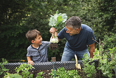 Smiling father and son holding harvested kohlrabi from raised bed in garden - p300m2221287 by Epiximages