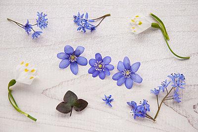 Spring flowers - p533m1016139 by Böhm Monika