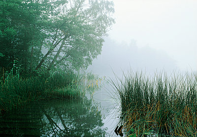 Trees by water with mist - p5751418f by Tero Niemi
