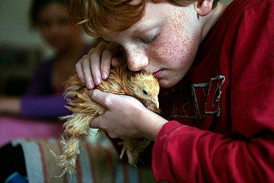 Boy cuddling with chick - p896m834688 by Stijn Rademaker