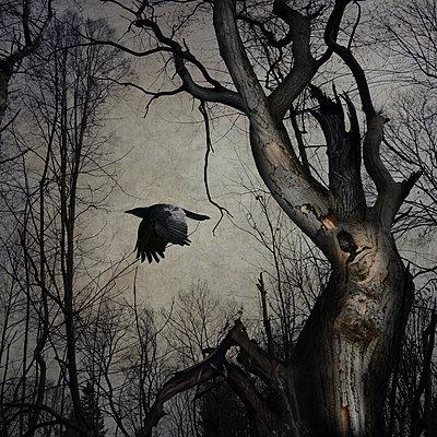 Black Winged Messenger Part XV - p1633m2208869 by Bernd Webler