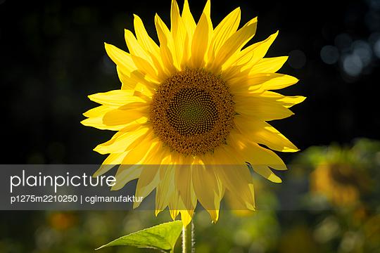 p1275m2210250 by cgimanufaktur