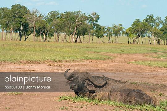 Masai Mara Nationalpark - p5330193 von Böhm Monika