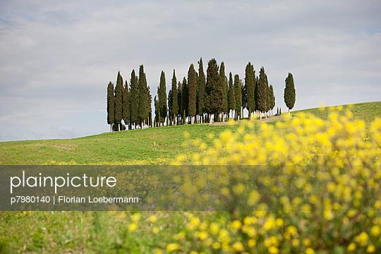 Cypress - p7980140 by Florian Loebermann