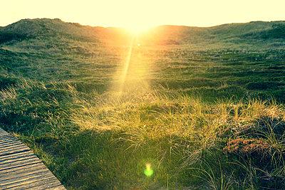 Graslandschaft auf Sylt - p432m1189779 von mia takahara