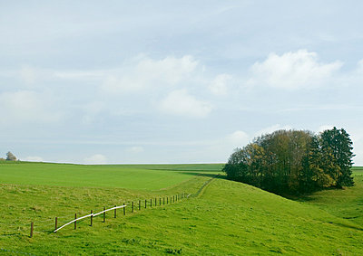 Green field with fence and grove of trees - p6242860f by Milena Boniek