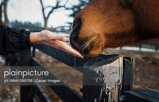 p1166m1555708 von Cavan Images