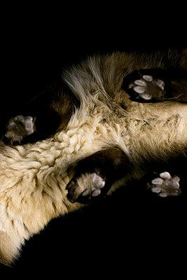 Katze von unten - p1076m944618 von TOBSN