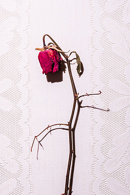 Withered flowers - p1149m2264091 by Yvonne Röder