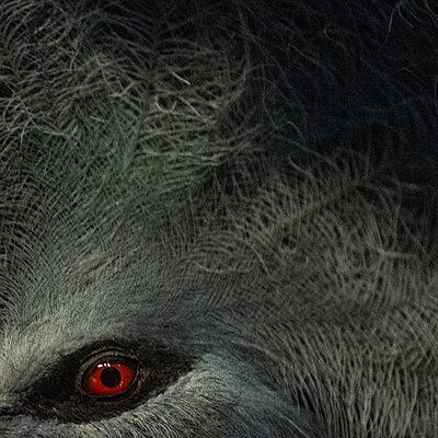 Red eye of bird, close-up - p1624m2195924 by Gabriela Torres Ruiz