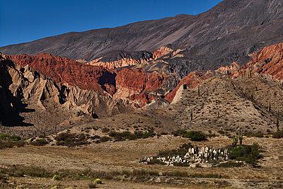Cemetery in the desert, Rosario de Lerma, Argentina - p1686m2288543 by Marius Gebhardt