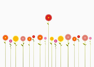 A row of various colored Gerbera Daisies and one towering above them - p301m714529f by Jutta Kuss