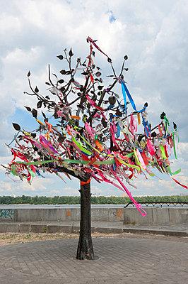 Wish Tree, Kiev, Ukraine, Europe - p871m711306 by Graham Lawrence