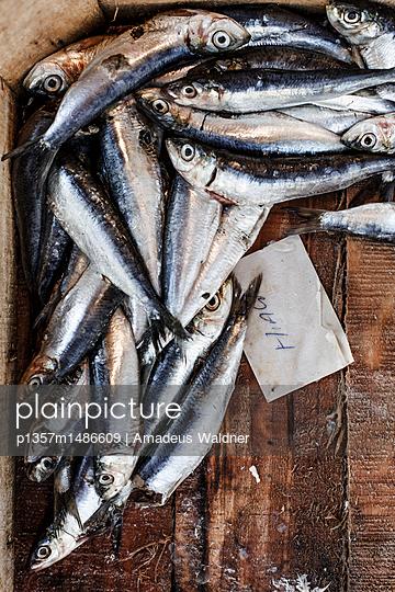 Fische  - p1357m1486609 von Amadeus Waldner
