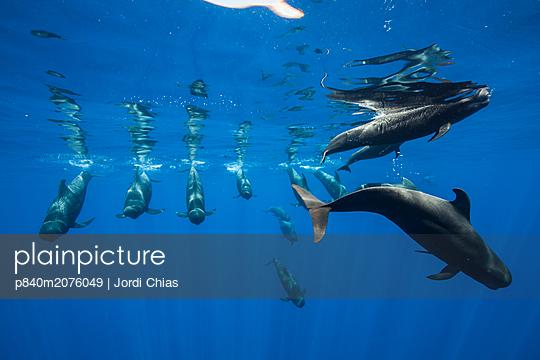 p840m2076049 von Jordi Chias