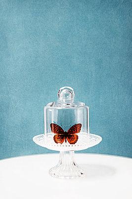 Schmetterling im Glas - p1574m2158148 von manuela deigert