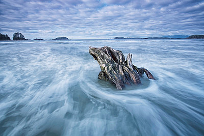 The tide coming in and flowing around a sunken piece of driftwood chesterman beach;Tofino vancouver island british columbia canada - p442m804917f by Robert Postma