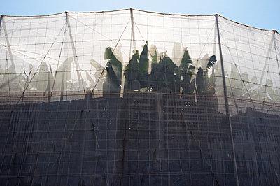 Bananenplantage - p751m1584770 von Dieter Schwer