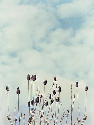 Pflanzen vor Himmel - p1212m1026050 von harry + lidy
