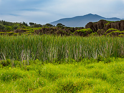 Australia, New South Wales, Bermagui, Storm clouds above field with high grass - p1427m1553672 by WalkerPod Images
